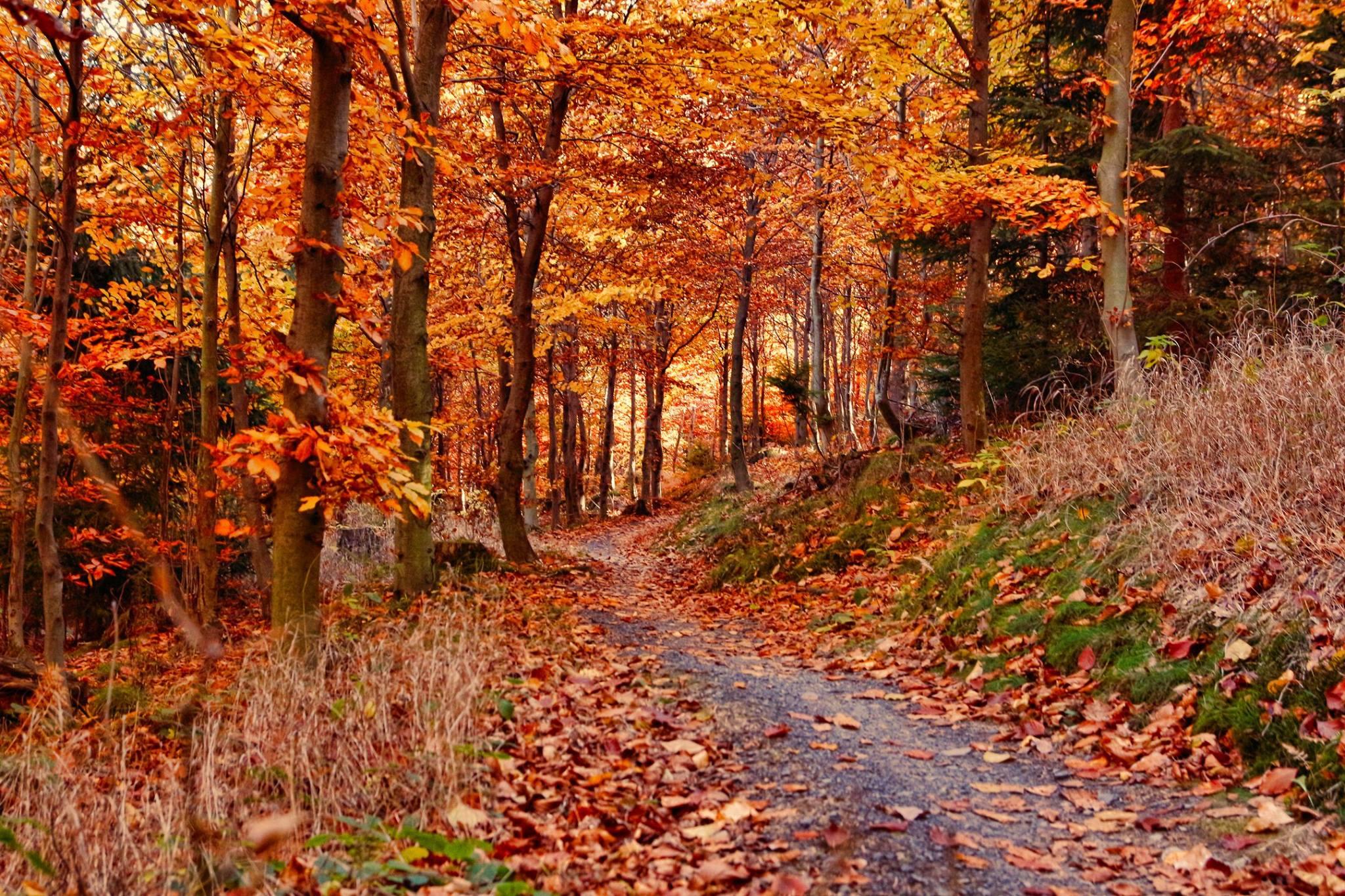 Podzim na Singltreku (foto: Tomáš Houzar)