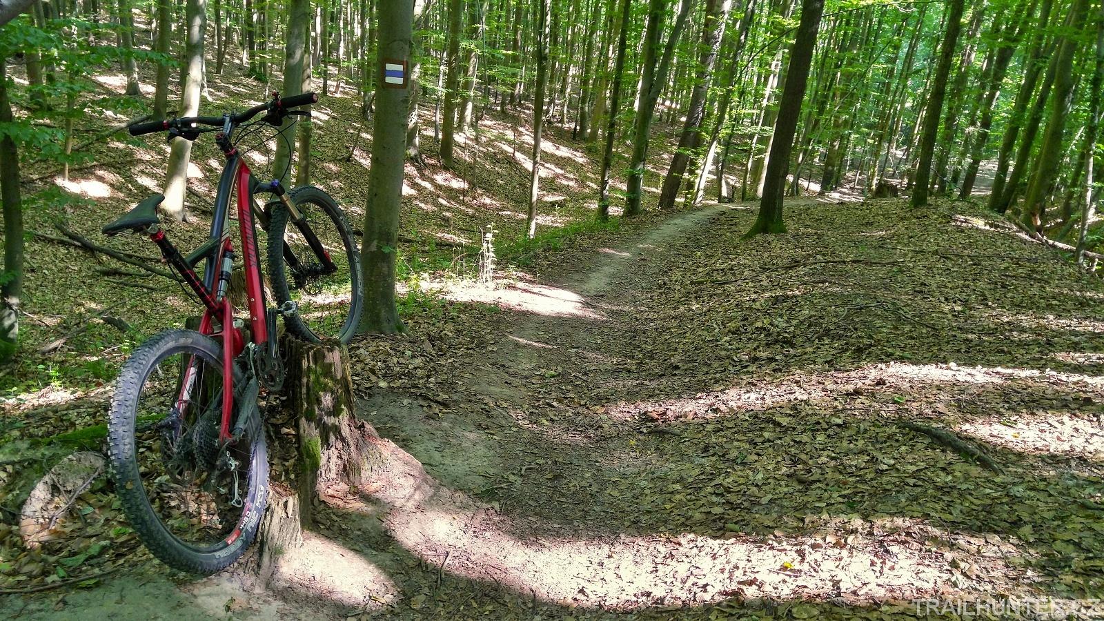 Svižný rychlý trail bez větších záludností