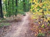 Kohoutovický trail