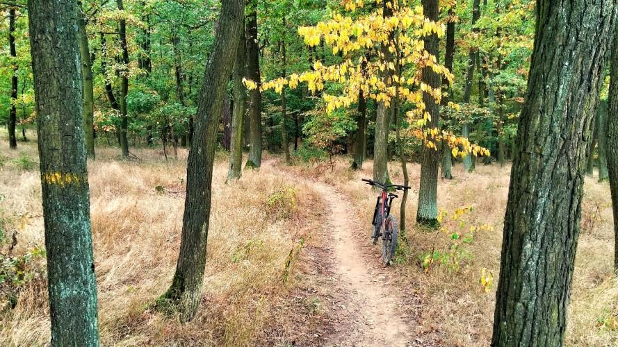 Trail kolem Staré hory: přírodní singletrail, kde si kolo chrochtá