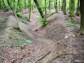 Trail Of Life - Lučina