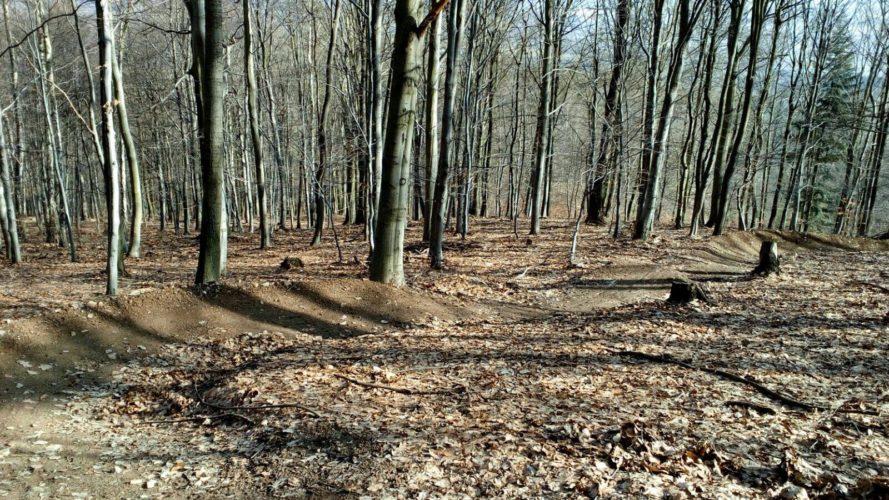 Cyklisté vs. správci lesa: Telnickým stezkám hrozí zánik, dva tisíce lidí jsou proti